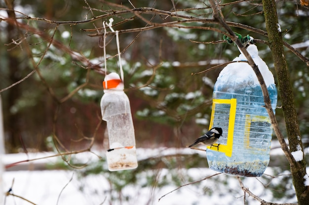 Sikora bogatka siedząca na karmniku z plastikowej butelki. słoneczny zimowy dzień. zdjęcie stockowe