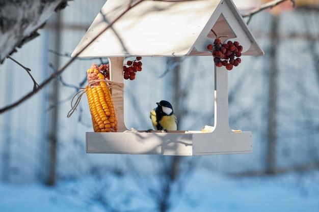 Sikora siedzi w słońcu w drewnianym karmniku dla ptaków