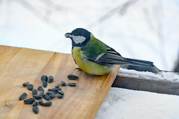 Sikora zjada nasiona słonecznika w karmniku w mroźną zimę