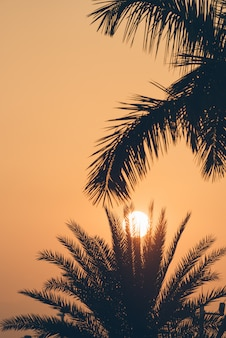 Silhouetted drzew o zachodzie słońca
