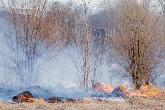 Silny ogień rozprzestrzenia się podmuchami wiatru przez suchą trawę, dymiącą suchą trawę, koncepcję pożaru i spalenia lasu.