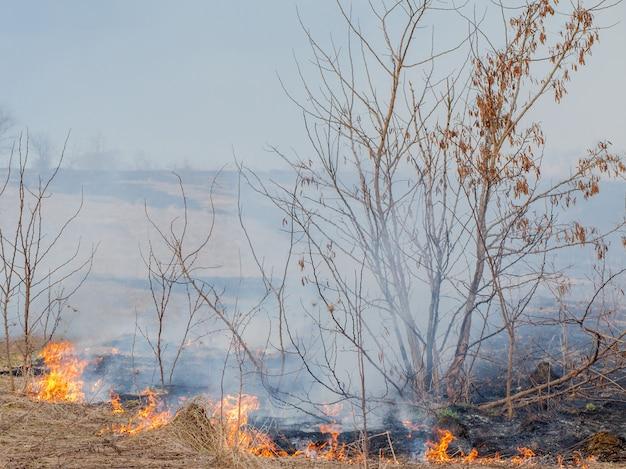 Silny ogień rozprzestrzenia się w podmuchach wiatru po suchej trawie