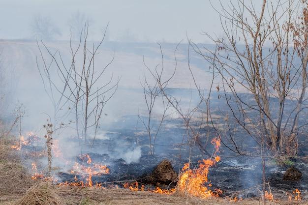 Silny ogień rozprzestrzenia się w podmuchach wiatru przez suchą trawę, dymiąc suchą trawę