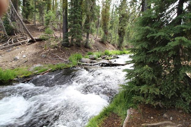 Silny przepływ rzeki z białą pianą w lesie