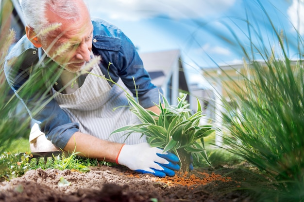 Siwowłosy ogrodnik. opiekuńczy siwowłosy ogrodnik w białych rękawiczkach wzbogacający glebę w pobliżu rośliny na zewnątrz domu