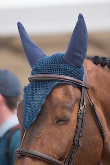 Skacząca głowa konia
