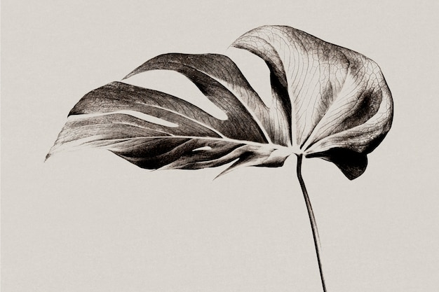 Skala szarości tła liścia monstery z efektem risografu zremiksowane media