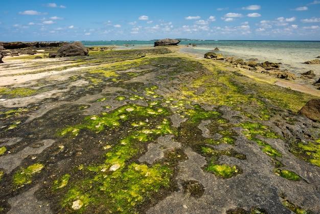 Skalista platforma nad morzem z formacją skalną z zielonych alg wyspa iriomote