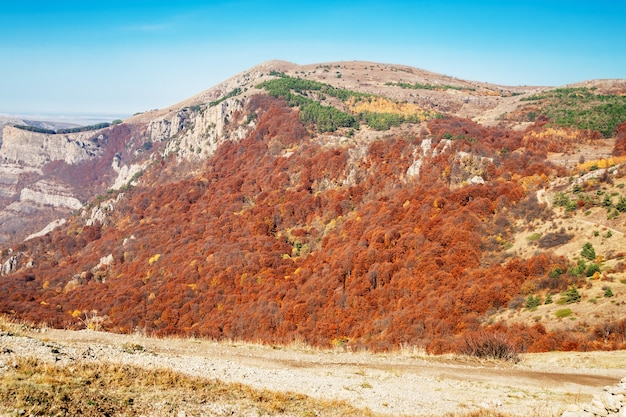 Skaliste góry z jasnymi kolorowymi jesiennymi drzewami na tle błękitnego nieba w sezonie jesiennym