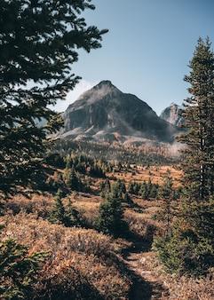 Skaliste góry z mgłą w jesiennym lesie w assiniboine provincial park, kanada