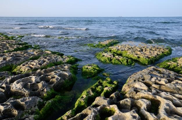 Skaliste wybrzeże morza kaspijskiego porośnięte glonami