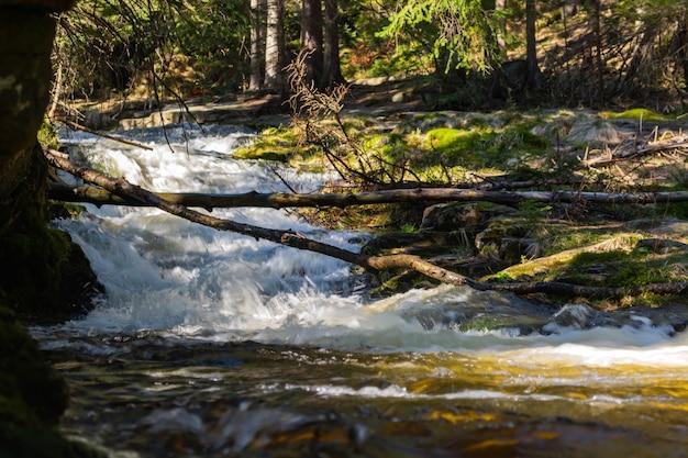 Skalisty górski potok i drzewa gumowe