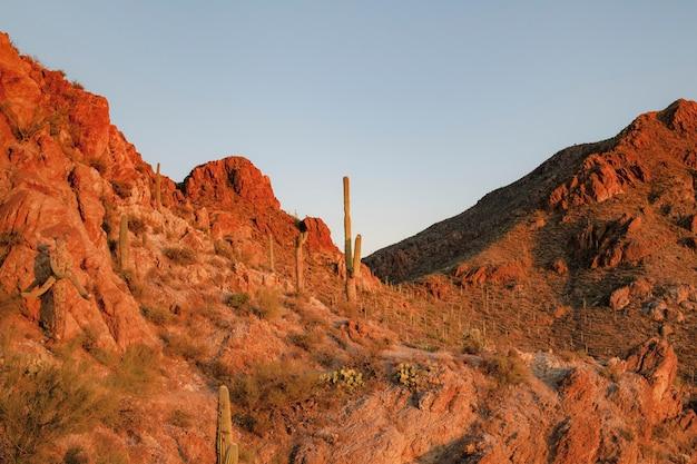 Skalne góry z pustynnym krajobrazem przyrody w tle