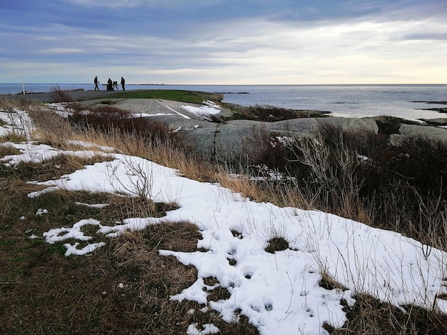 Skały pokryte gałęziami i śniegiem otoczone morzem pod zachmurzonym niebem w rakke w norwegii