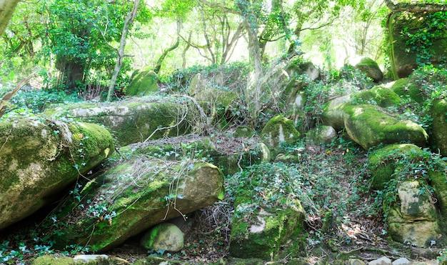 Skały w lesie