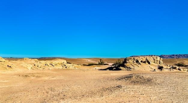 Skamieniałości wielorybów na pustyni ocucaje, peru