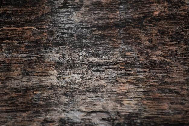 Skamieniały drewno tekstury tła