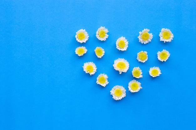 Skład biali żółci kwiaty. chryzantemy na niebieskim papierze.
