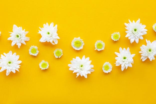 Skład biali żółci kwiaty. chryzantemy na żółtym papierze.