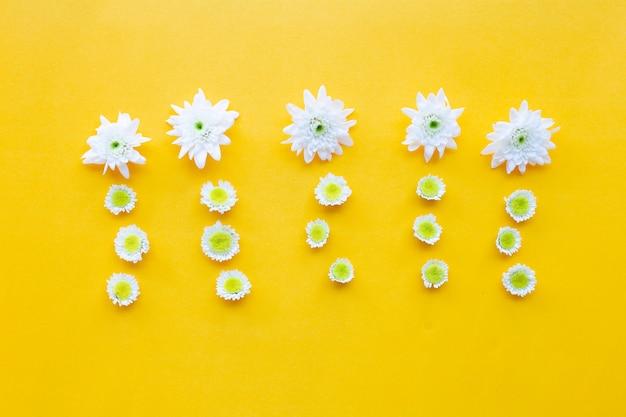 Skład biali żółci kwiaty. chryzantemy na żółtym papierze