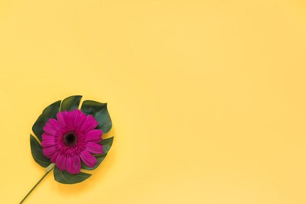 Skład duży kwiatu pączek na zielonym liściu