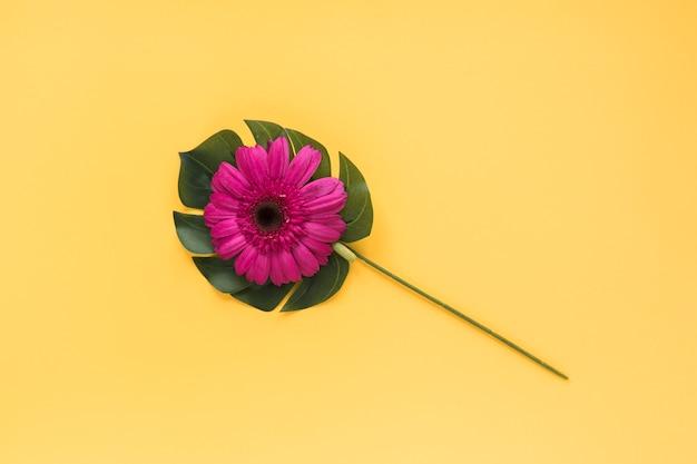 Skład duży kwiatu pączek na zielonym tropikalnym liściu