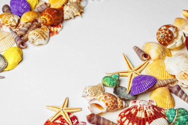 Skład egzotyczni seashells na białym tle