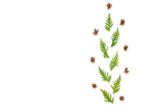 Skład gałązki tui i malutkich rożków odizolowywających na białym tle.