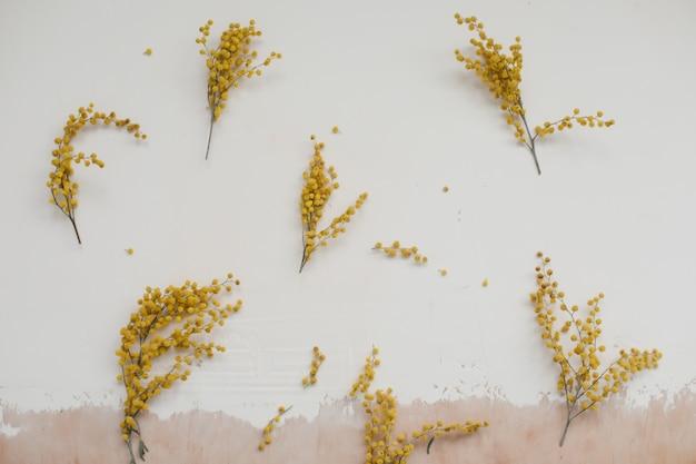 Skład kwiatów mimozy żółte kwiaty na białym tle