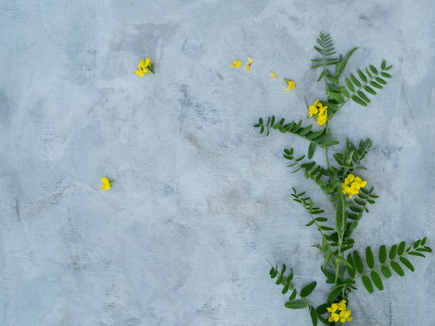 Skład lato kwiaty na szarym tle.