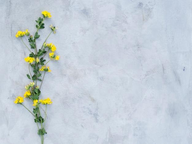 Skład lato kwitnie na szarym tle.