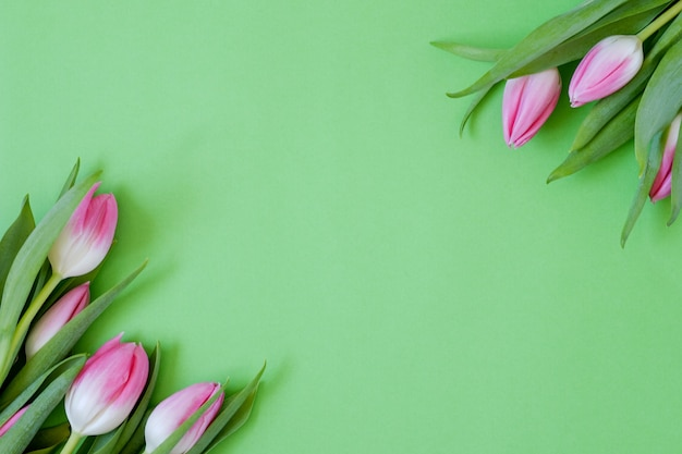 Skład różowe tulipany na zielono