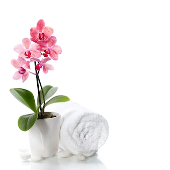Skład spa z piękną różową orchideą na białym tle