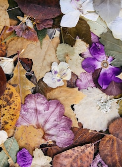 Skład suszonych jesiennych liści i kwiatów. naturalne tło. rośliny do zielnika.