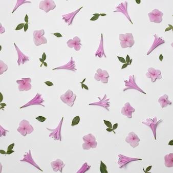 Skład wspaniałe fioletowe kwiaty i zielone liście