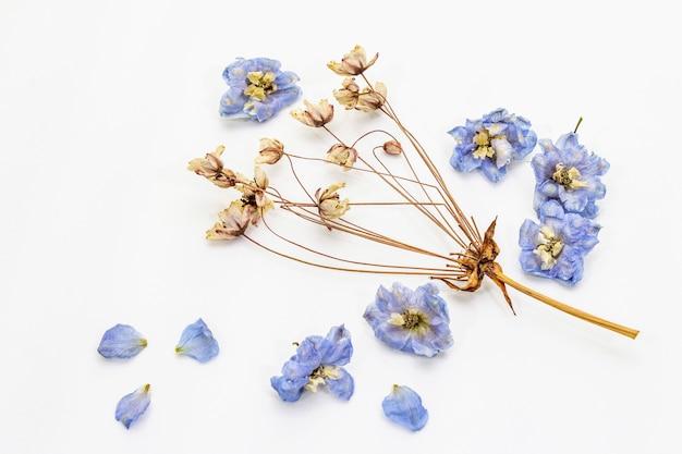 Skład wysuszeni kwiaty odizolowywający. delphinium i wiśnia