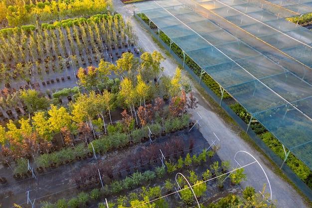 Sklep lub szkółka roślin ozdobnych. widok drona