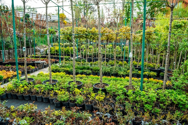 Sklep ogrodniczy. rząd roślin