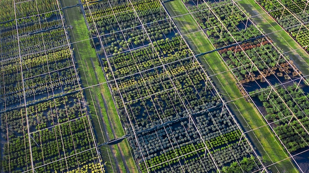 Sklep z szeroką gamą roślin ozdobnych do kształtowania krajobrazu. widok drona. duży asortyment roślin iglastych, liściastych i kwitnących.