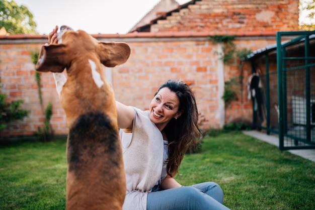 Skok psa beagle. gra na zewnątrz.