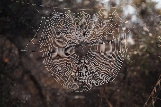 Skomplikowana pajęcza sieć