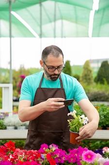 Skoncentrowany ogrodnik robi zdjęcie petunii w doniczce