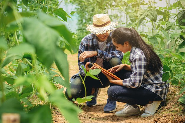 Skonsultowano się z naukowcami z właścicielem rolnika i agronomem, jak poprawić jakość gleby w przypadku fasoli długiej