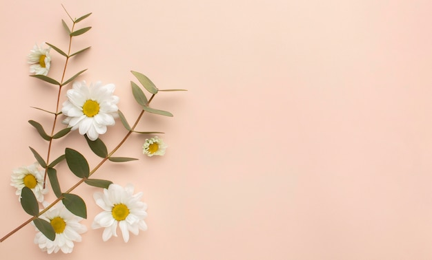 Skopiuj kwitnące kwiaty przestrzeni