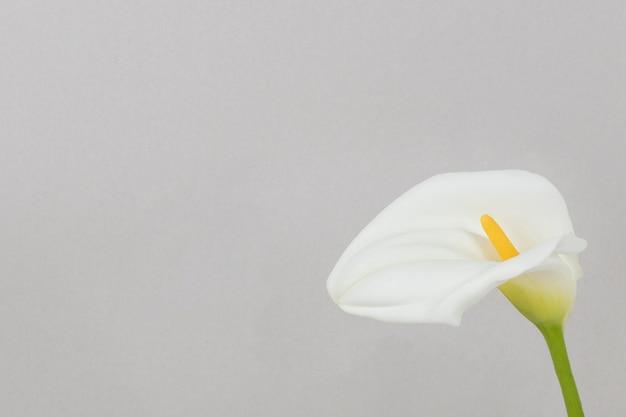 Skopiuj kwitnący kwiat przestrzeni
