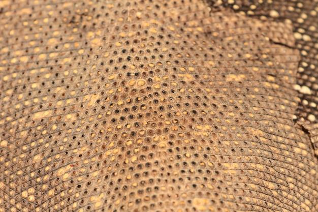 Skóra Jaszczurki Monitora Bengalskiego Premium Zdjęcia