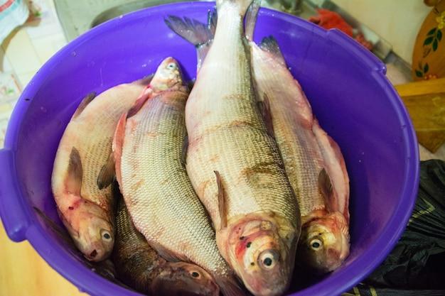 Skórka coregonus i coregonus nasus (biała ryba) przygotowane do gotowania. nadym.