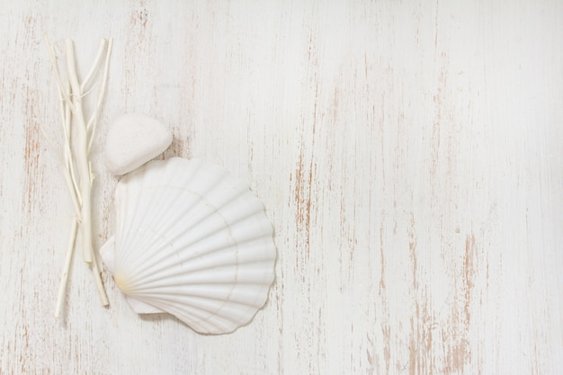 Skorupa na białej drewnianej powierzchni