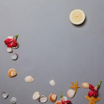 Skorupki, kwiaty i cytrynowy