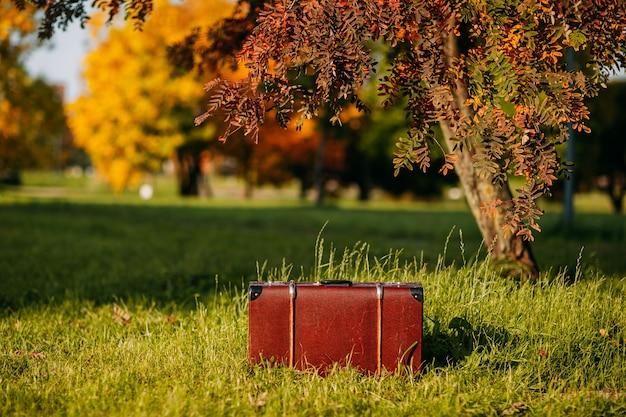 Skórzana walizka pod drzewem